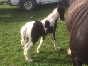 Colt by Hugo Boss x Foxtrot