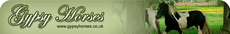 Gypsy Horses Banner Image