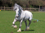 Click here to see our selection of Miscellaneous Horses/Items for Sale